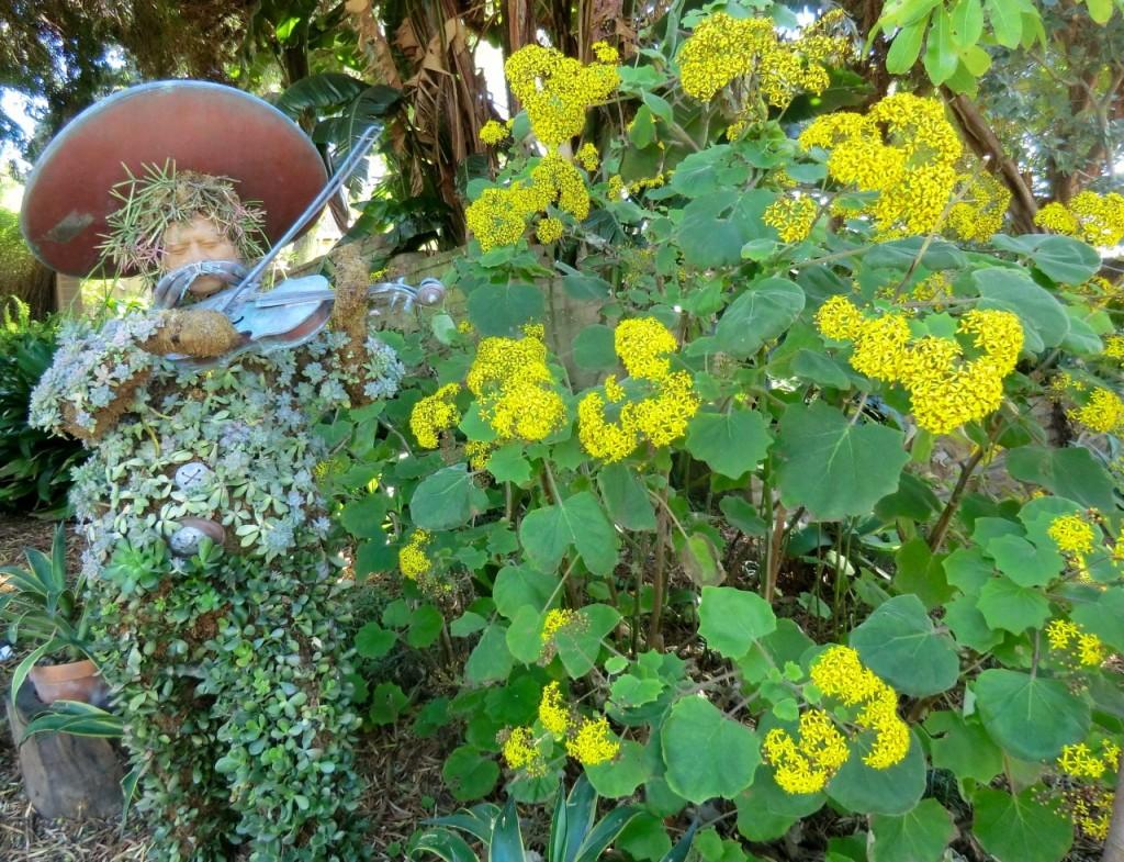 Velvet Groundsel  (plant)